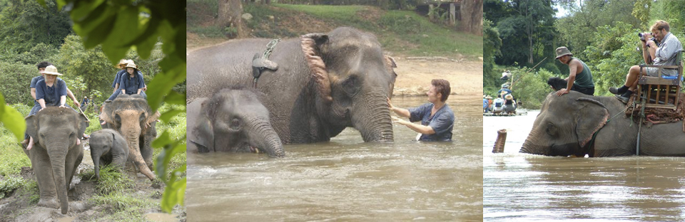 Elephant care camp and mahout training