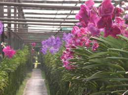 Orchid Farm2